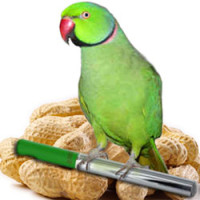 Percy the Parrot horoscopes
